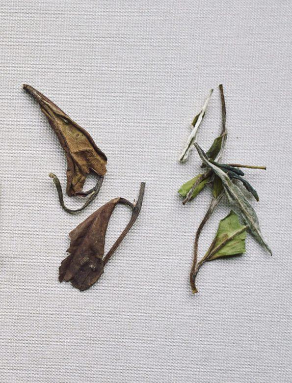 H2 – havonta két tea – éves jegyzés