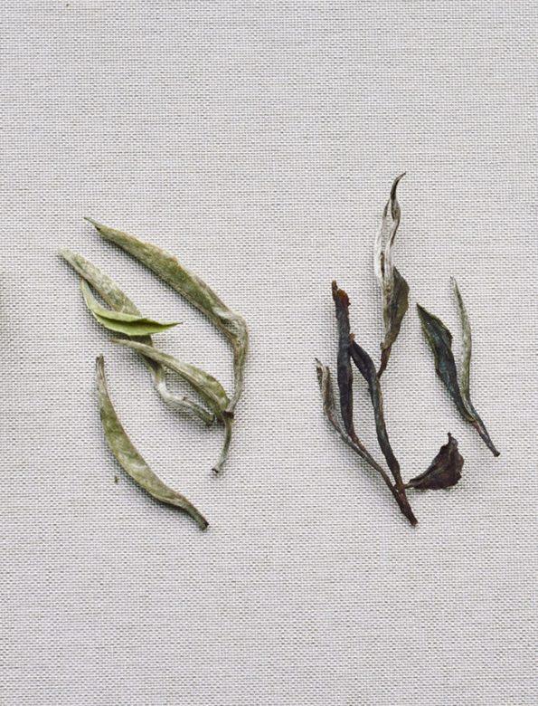 H2 – havonta két tea – negyedéves jegyzés