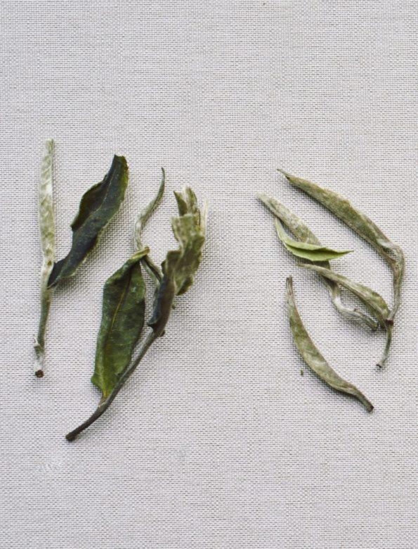 H2 – havonta két tea – féléves jegyzés