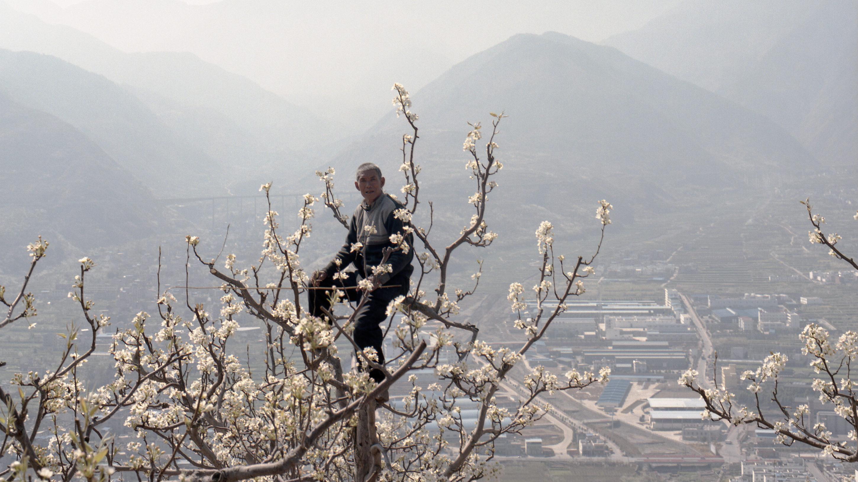 Hand Pollinators in China – exhibition of Mariann Fercsik