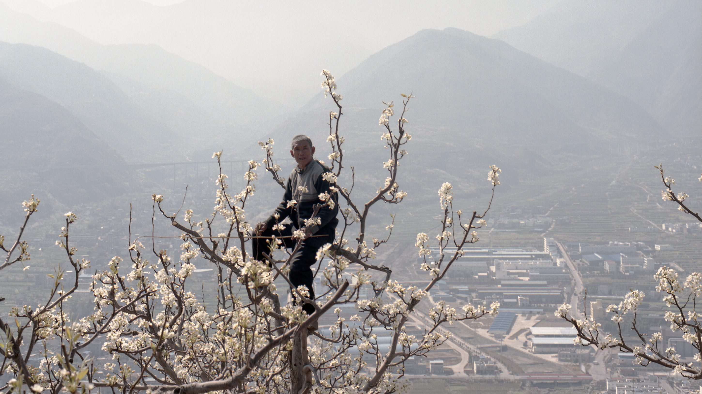 Kézi beporzók Kínában – Fercsik Mariann kiállítása